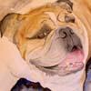 Bilder und cartoons rund um den hund
